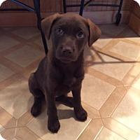 Adopt A Pet :: Zadie - New Oxford, PA
