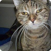 Adopt A Pet :: Gemma - Hamburg, NY