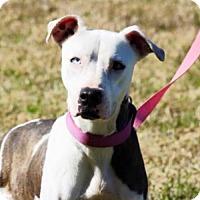 Adopt A Pet :: Margrit - Choudrant, LA
