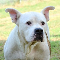 Adopt A Pet :: Buzz - Dallas, GA