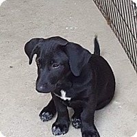 Adopt A Pet :: rolo - West Bend, WI