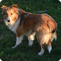 Adopt A Pet :: Neala - Prole, IA