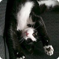 Adopt A Pet :: Grace - Valley City, ND