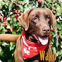 Adopt A Pet :: Waco - Hamilton, MT