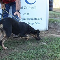 Adopt A Pet :: River - Grayson, LA