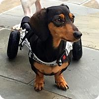Adopt A Pet :: Oliver2 - Orangeburg, SC