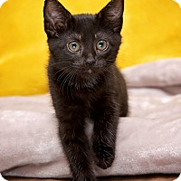 Adopt A Pet :: Hannah - Staten Island, NY