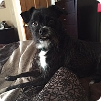 Adopt A Pet :: Mikey~meet me! - Glastonbury, CT