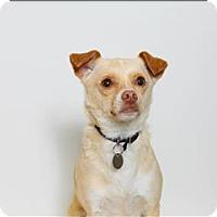 Adopt A Pet :: Jimmy - San Luis Obispo, CA