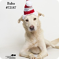 Adopt A Pet :: Balto - Baton Rouge, LA