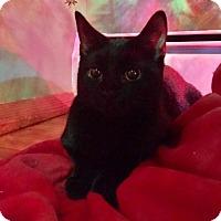 Adopt A Pet :: Dahlia - Baltimore, MD