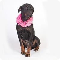 Adopt A Pet :: Remi - Tracy, CA