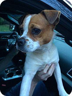Small Dog Animal Rescue Ontario