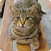 Adopt A Pet :: Peggy - Michigan City, IN