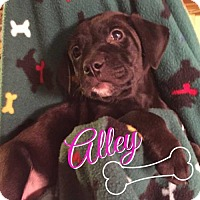 Adopt A Pet :: Ally - Foristell, MO