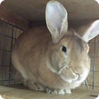Adopt A Pet :: Scratchie - Williston, FL