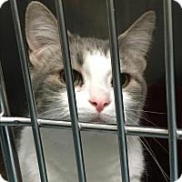 Adopt A Pet :: Dove - Portsmouth, VA