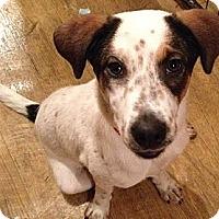 Adopt A Pet :: Dolly - Memphis, TN
