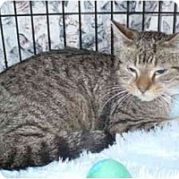 Adopt A Pet :: Whisper - Colmar, PA