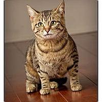 Adopt A Pet :: Miranda - Owensboro, KY