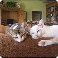 Adopt A Pet :: Dyno Columbus - Owasso, OK