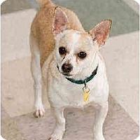 Adopt A Pet :: Ike - Portland, OR