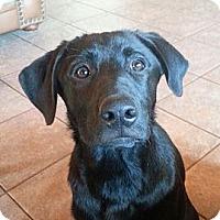 Adopt A Pet :: Lola - Russellville, KY