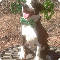 Adopt A Pet :: Boomer - Tullahoma, TN