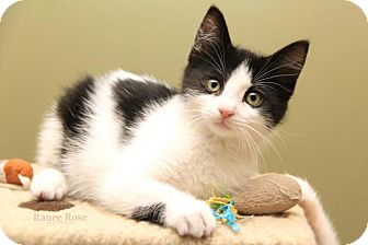 Tigerlily Cat Rescue Facebook