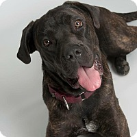 Adopt A Pet :: Greta-VA - Virginia Beach, VA