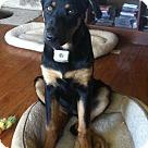 Adopt A Pet :: Brisket (COURTESY POST)