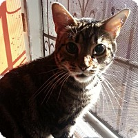 Adopt A Pet :: Rosco - Healdsburg, CA