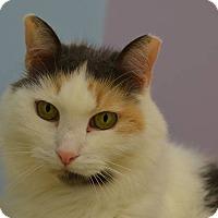 Adopt A Pet :: Maddie - Westbury, NY