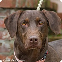 Adopt A Pet :: Cocoa - Enfield, CT