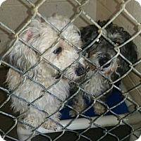 Adopt A Pet :: Salt - Harmony, Glocester, RI