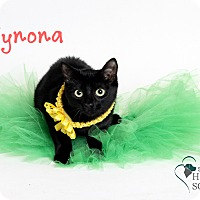 Adopt A Pet :: Wynona - Covington, LA