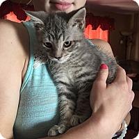 Adopt A Pet :: Logan - Putnam, CT