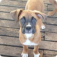 Adopt A Pet :: Baxter - Antioch, IL