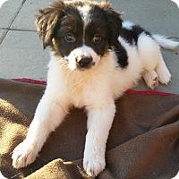 Adopt A Pet :: Lily - New Oxford, PA