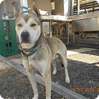 Adopt A Pet :: BUSTER - Hanford, CA