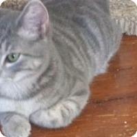 Adopt A Pet :: Renato - Devon, PA