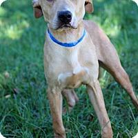 Adopt A Pet :: Sergei - Waldorf, MD