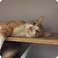 Adopt A Pet :: Roscoe - New York, NY