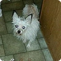 Adopt A Pet :: Louis - Maryville, IL
