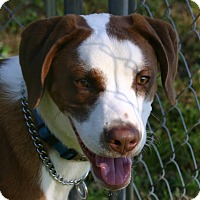 Adopt A Pet :: Happy - Waldorf, MD
