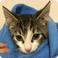 Adopt A Pet :: Edgar George - Toledo, OH