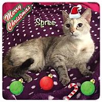 Adopt A Pet :: Spree - Harrisburg, NC