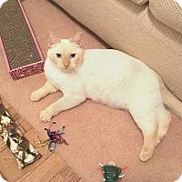 Adopt A Pet :: Gena - Pinckney, MI