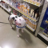 Adopt A Pet :: Loki - Pataskala, OH