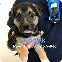 Adopt A Pet :: Kodiak - Agoura Hills, CA